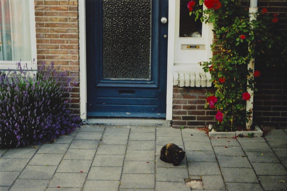 Portfolio_Dutch45